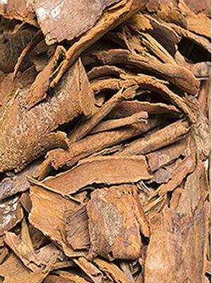 Corynanthe pachyceras