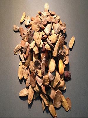 Picralima nitida seeds powder